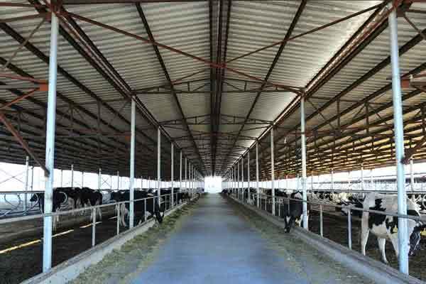 60x120 dairy barn