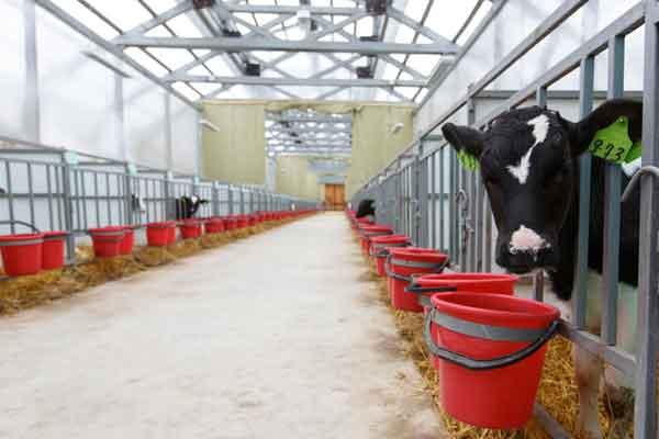 Milking Barn Interior